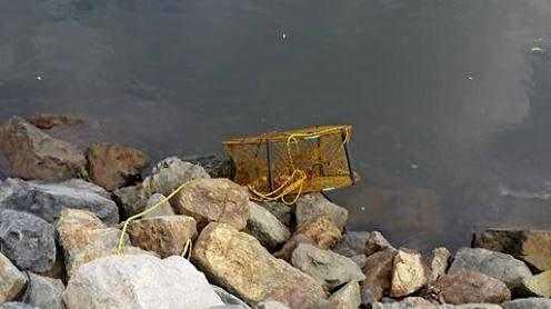 Beau Rochford's crab pots keep getting raided.