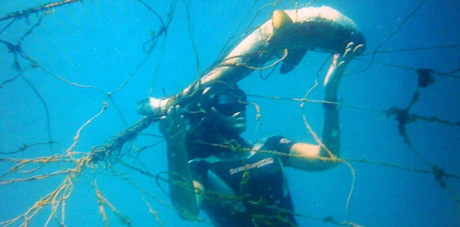 A shark trapped in fishing nets was released by Kelli Anderson, a keen environmentalist and diver. Photo EcoDivers