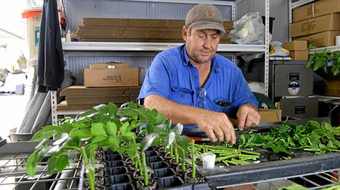 Don Currey working in the shed at Currey Flowers.