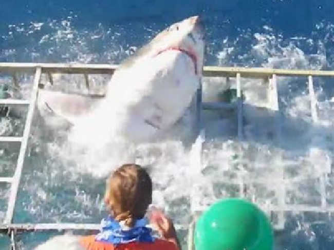 The moment the Great White smashes its way through the metal cage. Picture: Gabe and Garrett/YouTube