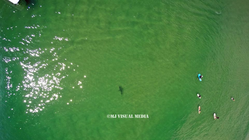 A shark cruises metres away from where a number of surfers were waiting for a wave