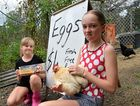 EIGHT dozen eggs were stolen from Eumundi sisters Tamzyn and Savanne's roadside stall. The young girls collect $4 for a carton of eggs and take what's left after buying chicken food as pocket money.