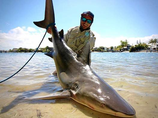 BIG CATCH: Fisherman James Holt reeled in a bull shark in the Noosa River on Sunday.