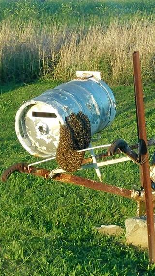 The offending swarm attached to Mr Rickard's mailbox.