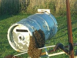 Swarm of bees takes over Warwick letterbox