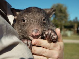 Introducing Australia Zoo's cutest new addition