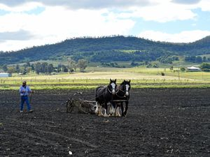 Rich history of heavy horses on the Southern Downs