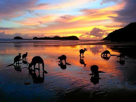 Sunrise at Cape Hillsborough brings kangaroos and wallabies to the beach.