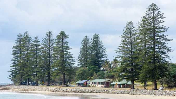 The pine trees on Brooms Head Main Beach.