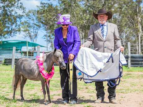 WINNER: Supreme Miniature Horse at last Saturdays MHAA Show was Kamelco Park Rebel Chasing Amazing Grace owned by Claire ORilley of Childers, who was presented with her trophies and prizes by judge Steve Thake of Woolooga.