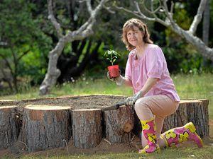 Community garden set for Palmwoods