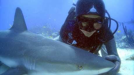 Madison Stewart with a Caribbean reef shark in 'tonic immobility' in a scene from the TV documentary Shark Girl. Supplied by ABC TV publicity. Please credit photo to Andy Casagrande.