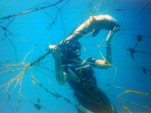 Shark nets by Christmas? Ballina mayor reveals DPI plan