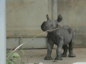 Baby Black Rhino Born in Iowa Zoo