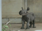 Baby Rhino born in Iowa zoo.