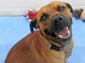TAKE ME HOME: Royce is just one of the great pets at the Gympie RSPCA Animal Care Centre waiting for a forever home.