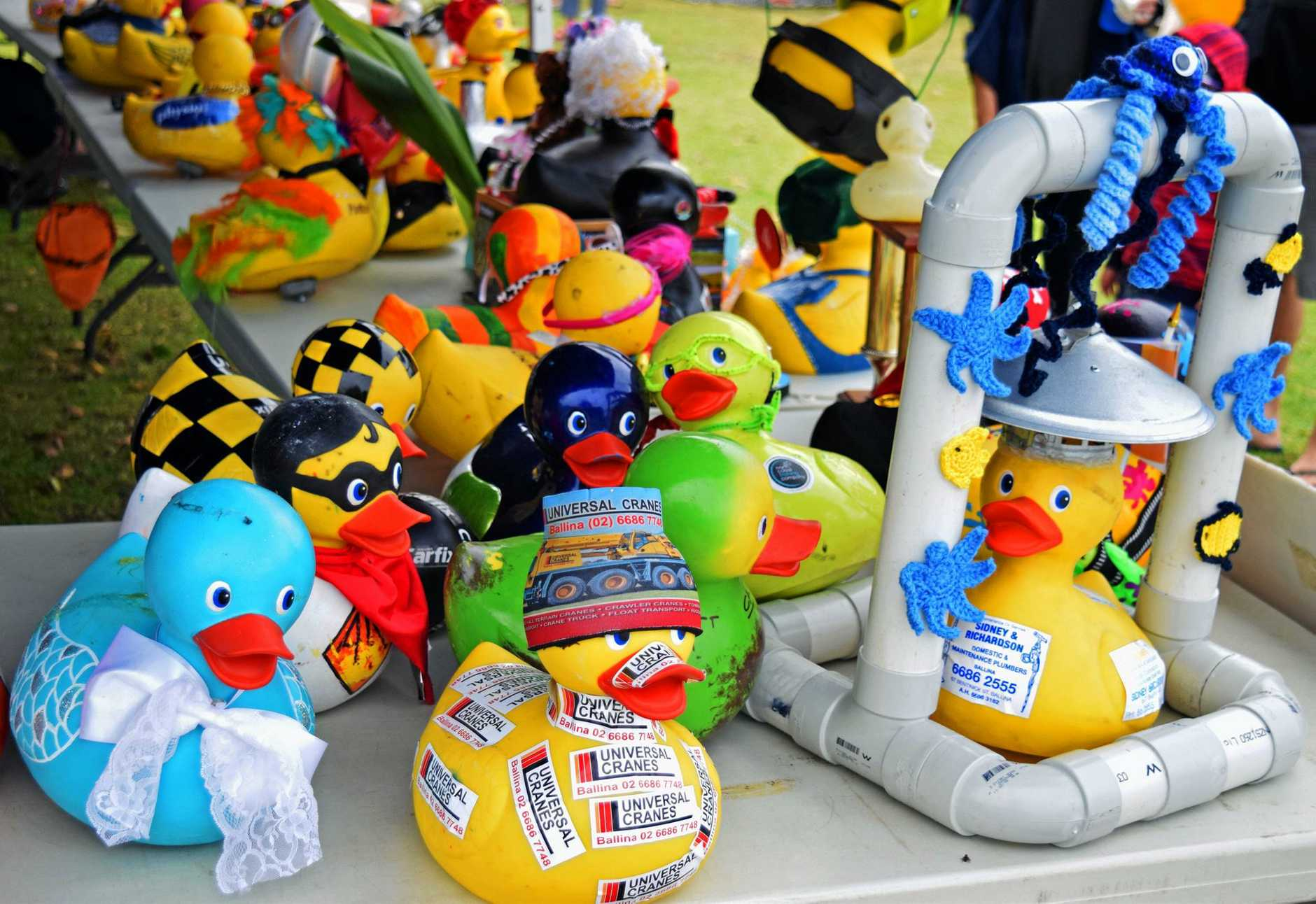 Dressed-up ducks in the corporate category of the Rotary Great Duck Race in Ballina.