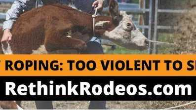 Billboard campaign by RSPCA Queensland and Animal Liberation Queensland which is calling on the State Government to ban calf roping events at rodeos.