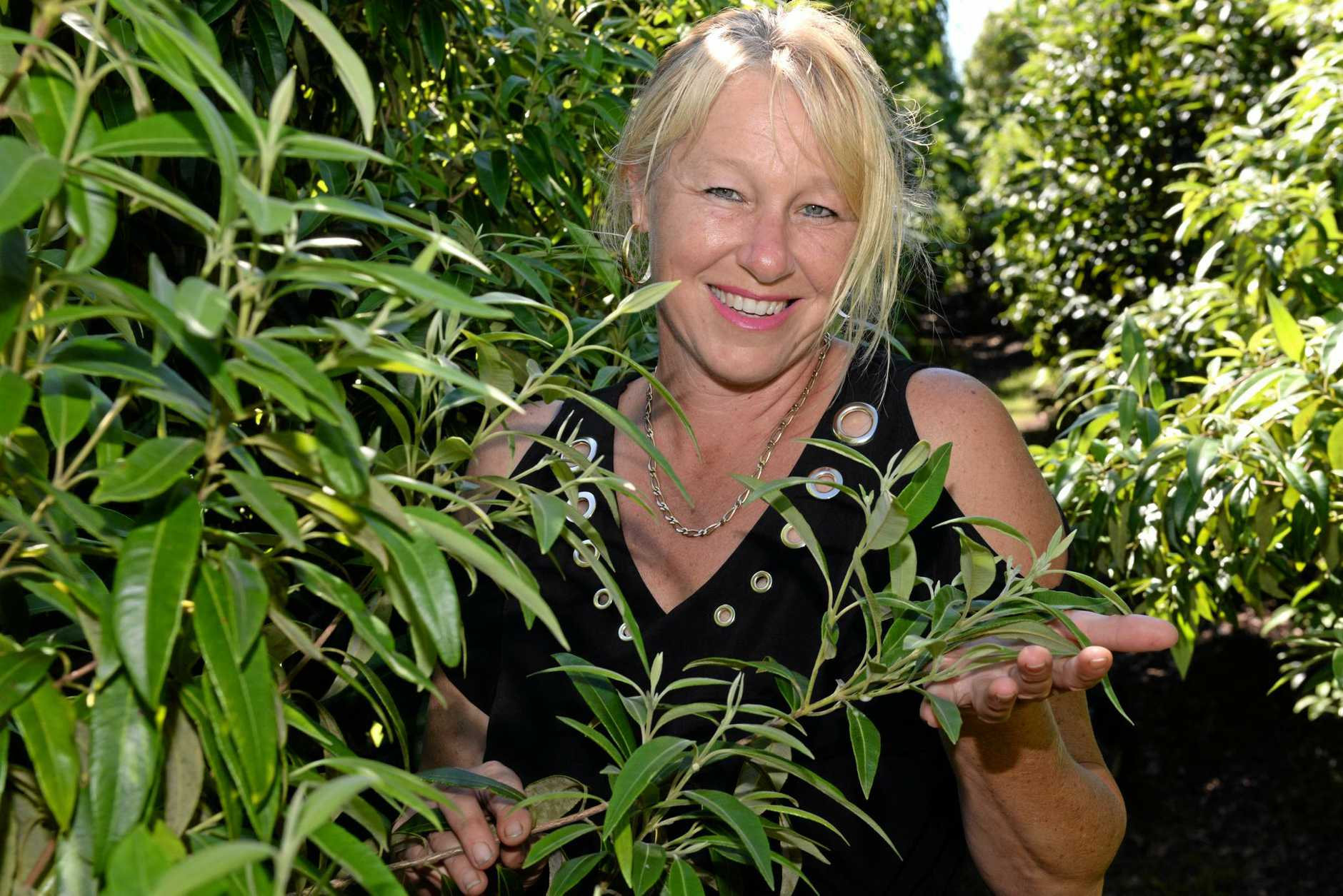 NATIVE PLANT: Fiona Walker with locally grown Lemon Myrtle. The leaves provide a great source of lemon flavour for cooking that special sweet or savoury dish.