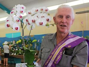 Bloomin' marvellous orchid a big winner