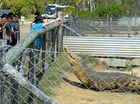 CRACKER CROC: Amanda Carolan feeds one of the crocodiles at the Koorana Crocodile Farm for Singaporean soldiers in Rockhampton for Exercise Wallaby.