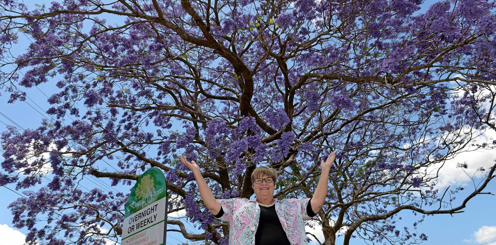 PURPLE HAZE: Wendy Savage from Hospital Grove Apartments loves the jacaranda tree outside the apartment complex.