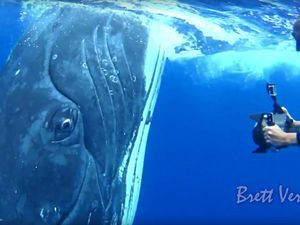 Staring into the eye of a 36-tonne humpback