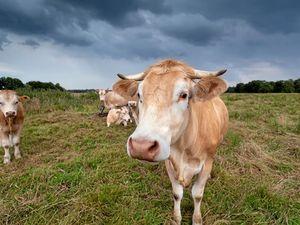 Calm your farm for storm season