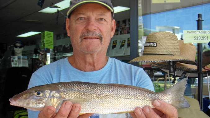 NICE ONE, PHIL: Phil Beeitzel with a 39cm whiting.
