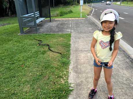 Jasmine Ruutz and her mother made sure this snake was able to safely cross the road.