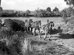 Horses reigned supreme in bygone era