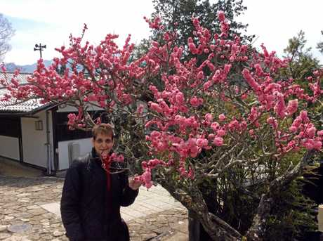 Tina Cooney looks at the cherry trees in bloom in Japan, which has been a popular destination for Mackay residents.
