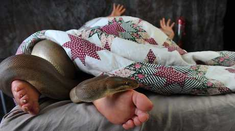 Waking up with a snake in your bed would be terrifying for most people (file photo).