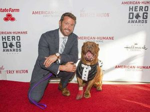 Abused French mastiff is Hero Dog of the Year