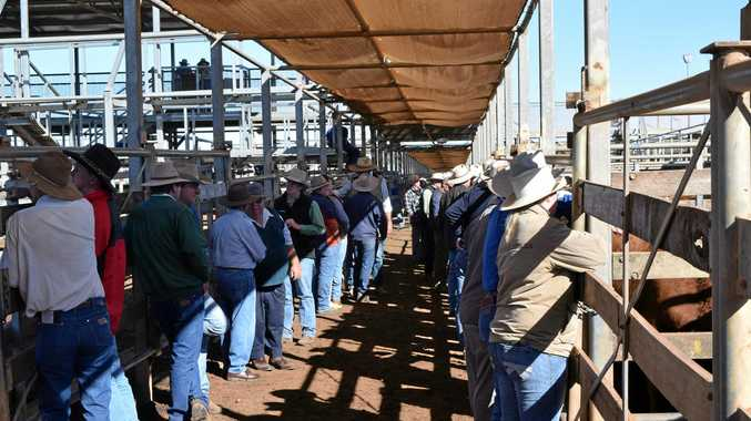 TALKS: The Council has organised a community consultation at the Roma Saleyards.