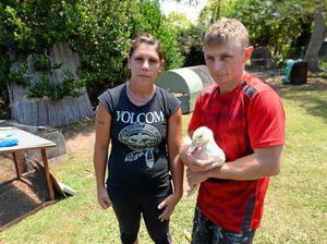 Police investigating brutal murder of family pets