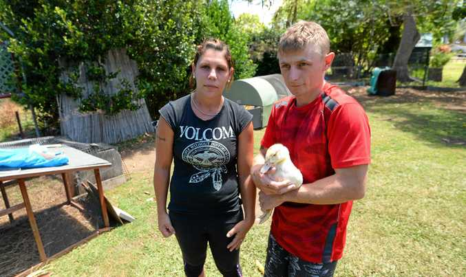 HORRIFIC ACT: Kelly and Scott Sheargold with one of their surviving pet ducks after someone came into their yard and killed several others last week.