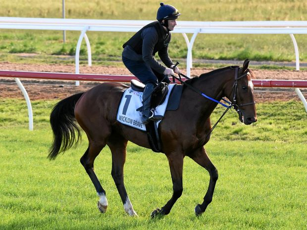 Wicklow Brave during trackwork at Werribee ahead of the Melbourne Cup.