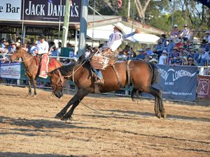 Massive crowd for Warwick Rodeo across the week