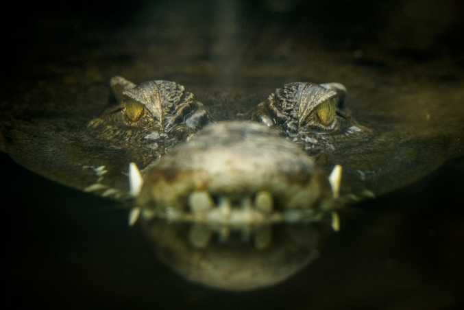 Wildlife officers are searching for a crocodile spotted by a  fisherman.