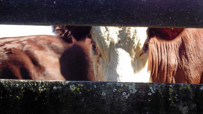 There has been reports of cartel-conduct at cattle saleyards.