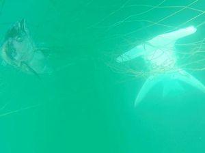 Surfer creates more shark myths, says marine ecologist