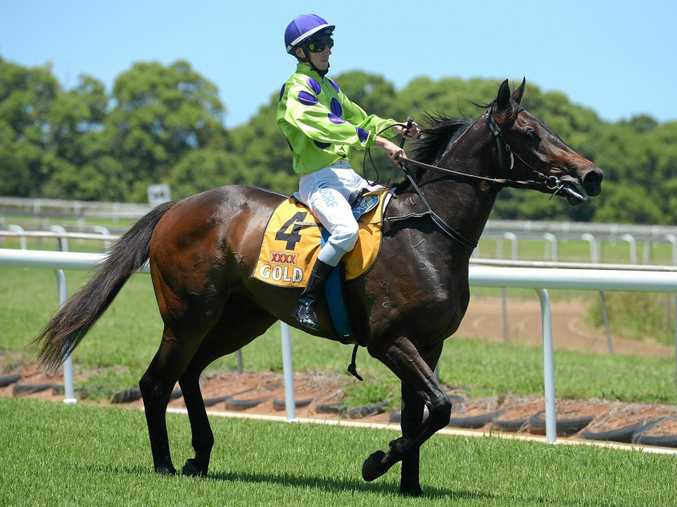 EARLY SPEED THE KEY: Greg Howells-trained Text Me will be bullocking out of the barriers at Grafton as he looks to find an inside alley from gate 11.