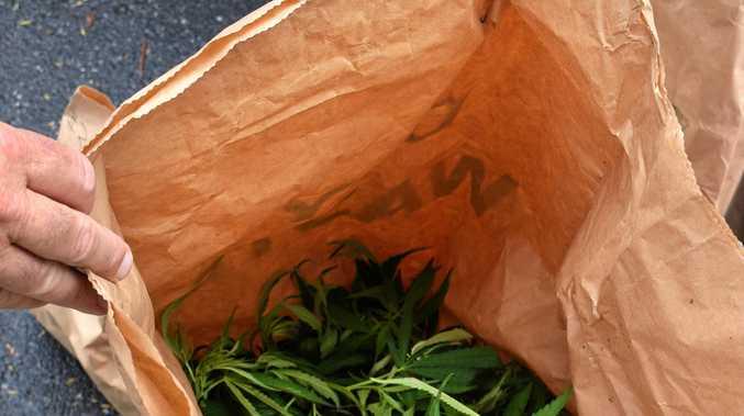 Medicinal marijuana could soon be grown on the Sunshine Coast.
