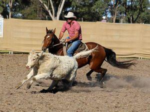 Horses in pen for campdraft fundraiser