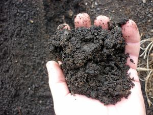 UPDATE: Councillors lock horns over compost plans