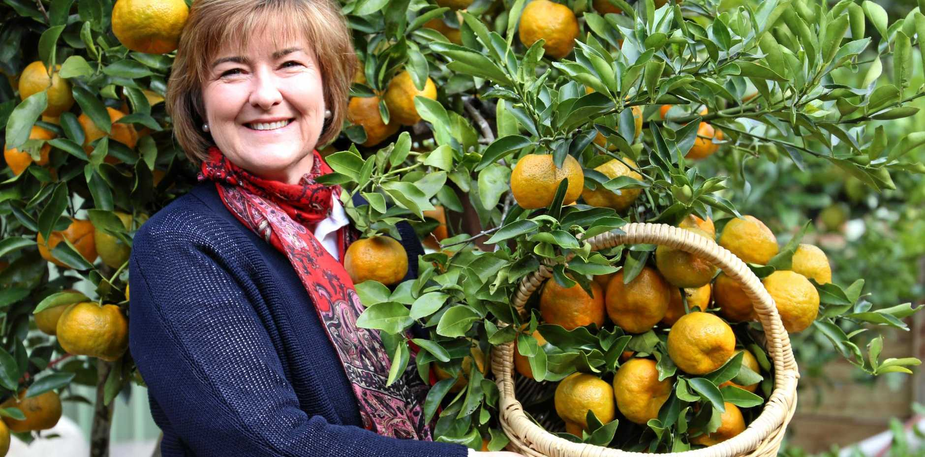 SPARE HARVEST: Helen Andrew's idea was sparked by an overhaul of mandarins one winter.