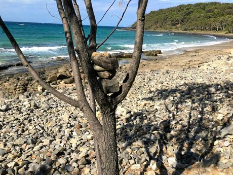 Rocks stacked in a tree in Noosa National Park are posing a safety risk.