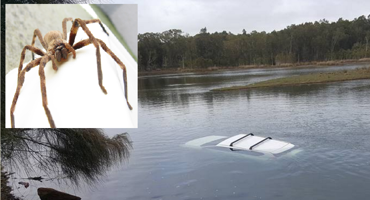 This Toyota Prado ended up in the drink after a huntsman scared its driver.