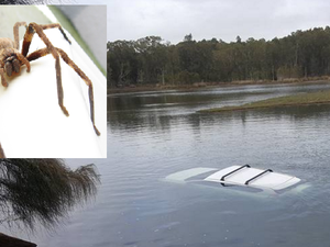 Spider scares driver enough to send car into lake